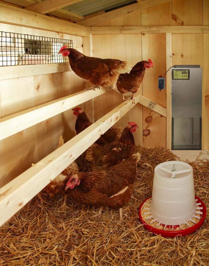 auto chicken door